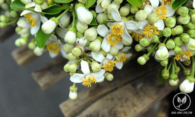 hoa buoi ha noi